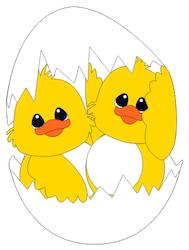 Baby Chicks- 2012